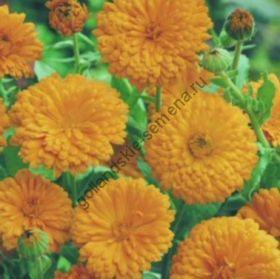 "Календула сорт ""ОРАНЖЕВЫЙ КОРОЛЬ"" (Orange King)   2 гр"