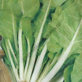 """Мангольд сорт """"ЖЕЛТЫЙ УИТРИБИДЖ""""(gele witribbige) 400 семян"""