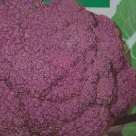 "Капуста цветная ""ФИОЛЕТ""(Bloemkool Violet) 300 семян"